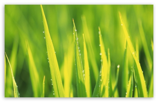 Spring Grass HD wallpaper for Wide 16:10 5:3 Widescreen WHXGA WQXGA WUXGA WXGA WGA ; HD 16:9 High Definition WQHD QWXGA 1080p 900p 720p QHD nHD ; Standard 4:3 5:4 3:2 Fullscreen UXGA XGA SVGA QSXGA SXGA DVGA HVGA HQVGA devices ( Apple PowerBook G4 iPhone 4 3G 3GS iPod Touch ) ; Tablet 1:1 ; iPad 1/2/Mini ; Mobile 4:3 5:3 3:2 16:9 5:4 - UXGA XGA SVGA WGA DVGA HVGA HQVGA devices ( Apple PowerBook G4 iPhone 4 3G 3GS iPod Touch ) WQHD QWXGA 1080p 900p 720p QHD nHD QSXGA SXGA ;