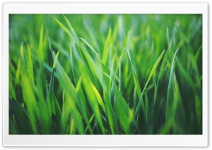 Spring Grass HD Wide Wallpaper for Widescreen
