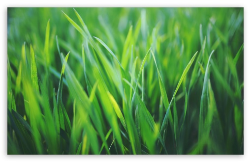 Spring Grass ❤ 4K UHD Wallpaper for Wide 16:10 5:3 Widescreen WHXGA WQXGA WUXGA WXGA WGA ; 4K UHD 16:9 Ultra High Definition 2160p 1440p 1080p 900p 720p ; UHD 16:9 2160p 1440p 1080p 900p 720p ; Standard 4:3 5:4 3:2 Fullscreen UXGA XGA SVGA QSXGA SXGA DVGA HVGA HQVGA ( Apple PowerBook G4 iPhone 4 3G 3GS iPod Touch ) ; Smartphone 5:3 WGA ; Tablet 1:1 ; iPad 1/2/Mini ; Mobile 4:3 5:3 3:2 16:9 5:4 - UXGA XGA SVGA WGA DVGA HVGA HQVGA ( Apple PowerBook G4 iPhone 4 3G 3GS iPod Touch ) 2160p 1440p 1080p 900p 720p QSXGA SXGA ; Dual 16:10 5:3 16:9 4:3 5:4 WHXGA WQXGA WUXGA WXGA WGA 2160p 1440p 1080p 900p 720p UXGA XGA SVGA QSXGA SXGA ;
