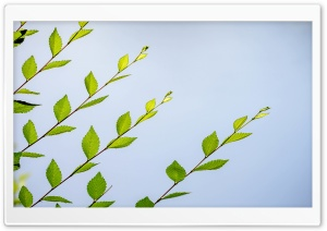 Spring Green Leaves HD Wide Wallpaper for Widescreen