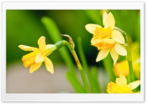 Spring Has Sprung HD Wide Wallpaper for Widescreen