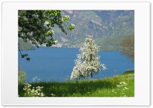 Spring in central Switzerland Buochs, Lake Lucerne Ultra HD Wallpaper for 4K UHD Widescreen desktop, tablet & smartphone