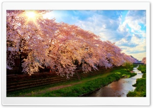 Spring In Japan HD Wide Wallpaper for 4K UHD Widescreen desktop & smartphone