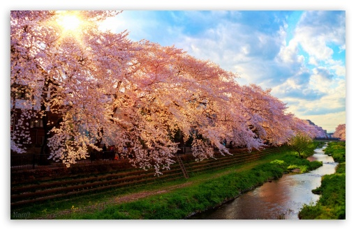 Spring In Japan ❤ 4K UHD Wallpaper for Wide 16:10 5:3 Widescreen WHXGA WQXGA WUXGA WXGA WGA ; 4K UHD 16:9 Ultra High Definition 2160p 1440p 1080p 900p 720p ; Standard 3:2 Fullscreen DVGA HVGA HQVGA ( Apple PowerBook G4 iPhone 4 3G 3GS iPod Touch ) ; Mobile 5:3 3:2 16:9 - WGA DVGA HVGA HQVGA ( Apple PowerBook G4 iPhone 4 3G 3GS iPod Touch ) 2160p 1440p 1080p 900p 720p ;