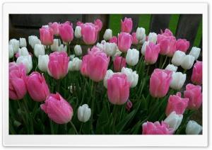 Spring is Here Ultra HD Wallpaper for 4K UHD Widescreen desktop, tablet & smartphone