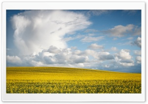 Spring Landscape HD Wide Wallpaper for Widescreen