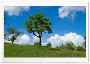 Spring Landscape Nature HD Wide Wallpaper for 4K UHD Widescreen desktop & smartphone