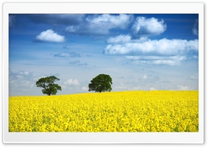 Spring Landscape Nature HD Wide Wallpaper for Widescreen