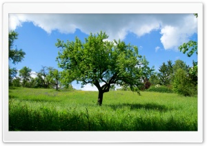 Spring Landscape Nature 8 HD Wide Wallpaper for Widescreen