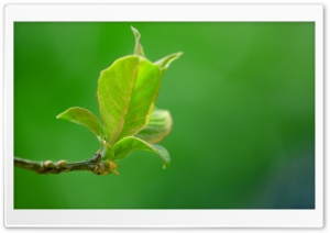 Spring Leaves HD Wide Wallpaper for Widescreen