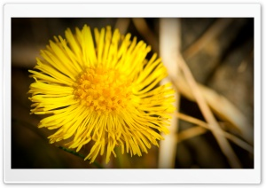 Spring Macro HD Wide Wallpaper for Widescreen