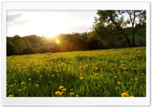 Spring Meadow HD Wide Wallpaper for Widescreen