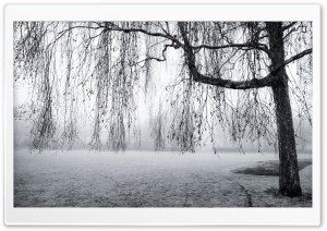 Spring Mist Black and White HD Wide Wallpaper for Widescreen