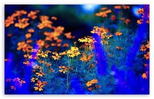 Spring Nature Flowers 4k Hd Desktop Wallpaper For Wide