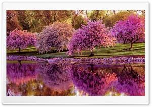 Spring Pink Blossom Trees Ultra HD Wallpaper for 4K UHD Widescreen desktop, tablet & smartphone