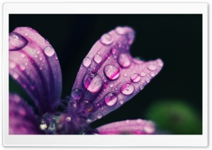 Spring Rain Drops HD Wide Wallpaper for 4K UHD Widescreen desktop & smartphone