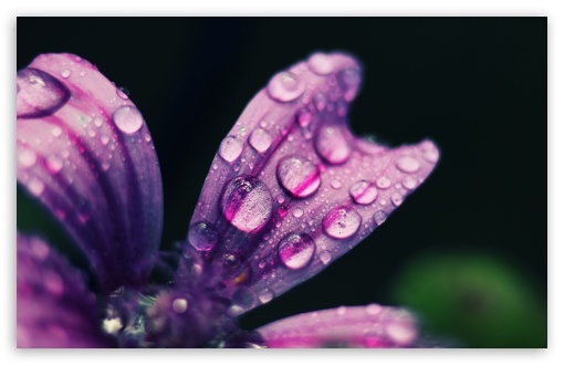 Spring Rain Drops HD wallpaper for Wide 16:10 5:3 Widescreen WHXGA WQXGA WUXGA WXGA WGA ; HD 16:9 High Definition WQHD QWXGA 1080p 900p 720p QHD nHD ; UHD 16:9 WQHD QWXGA 1080p 900p 720p QHD nHD ; Standard 4:3 5:4 3:2 Fullscreen UXGA XGA SVGA QSXGA SXGA DVGA HVGA HQVGA devices ( Apple PowerBook G4 iPhone 4 3G 3GS iPod Touch ) ; Tablet 1:1 ; iPad 1/2/Mini ; Mobile 4:3 5:3 3:2 16:9 5:4 - UXGA XGA SVGA WGA DVGA HVGA HQVGA devices ( Apple PowerBook G4 iPhone 4 3G 3GS iPod Touch ) WQHD QWXGA 1080p 900p 720p QHD nHD QSXGA SXGA ;