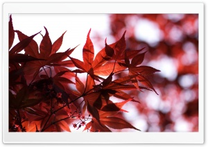 Spring Red HD Wide Wallpaper for Widescreen