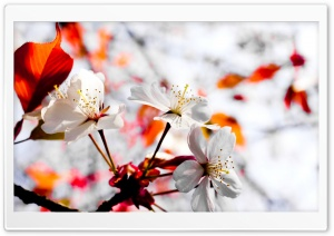 Spring Season Flowers HD Wide Wallpaper for Widescreen