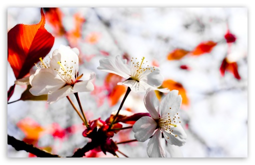 Spring Season Flowers HD wallpaper for Wide 16:10 5:3 Widescreen WHXGA WQXGA WUXGA WXGA WGA ; HD 16:9 High Definition WQHD QWXGA 1080p 900p 720p QHD nHD ; Standard 4:3 5:4 3:2 Fullscreen UXGA XGA SVGA QSXGA SXGA DVGA HVGA HQVGA devices ( Apple PowerBook G4 iPhone 4 3G 3GS iPod Touch ) ; Tablet 1:1 ; iPad 1/2/Mini ; Mobile 4:3 5:3 3:2 16:9 5:4 - UXGA XGA SVGA WGA DVGA HVGA HQVGA devices ( Apple PowerBook G4 iPhone 4 3G 3GS iPod Touch ) WQHD QWXGA 1080p 900p 720p QHD nHD QSXGA SXGA ; Dual 16:10 5:3 16:9 4:3 5:4 WHXGA WQXGA WUXGA WXGA WGA WQHD QWXGA 1080p 900p 720p QHD nHD UXGA XGA SVGA QSXGA SXGA ;