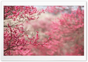 Spring Signs HD Wide Wallpaper for Widescreen