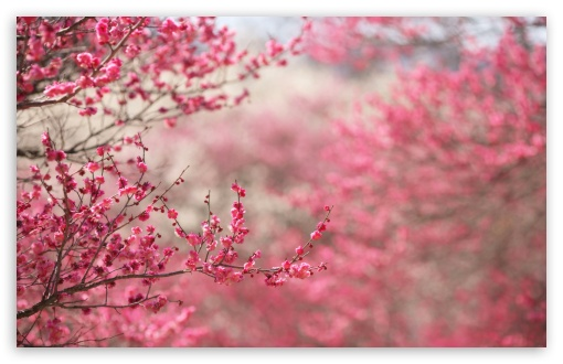 Spring Signs ❤ 4K UHD Wallpaper for Wide 16:10 5:3 Widescreen WHXGA WQXGA WUXGA WXGA WGA ; 4K UHD 16:9 Ultra High Definition 2160p 1440p 1080p 900p 720p ; Standard 4:3 5:4 3:2 Fullscreen UXGA XGA SVGA QSXGA SXGA DVGA HVGA HQVGA ( Apple PowerBook G4 iPhone 4 3G 3GS iPod Touch ) ; Tablet 1:1 ; iPad 1/2/Mini ; Mobile 4:3 5:3 3:2 16:9 5:4 - UXGA XGA SVGA WGA DVGA HVGA HQVGA ( Apple PowerBook G4 iPhone 4 3G 3GS iPod Touch ) 2160p 1440p 1080p 900p 720p QSXGA SXGA ; Dual 16:10 5:3 16:9 4:3 5:4 WHXGA WQXGA WUXGA WXGA WGA 2160p 1440p 1080p 900p 720p UXGA XGA SVGA QSXGA SXGA ;