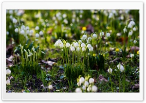 Spring Snowflake HD Wide Wallpaper for Widescreen