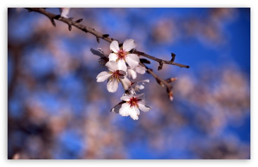 Spring, Spain HD wallpaper for Standard 4:3 5:4 Fullscreen UXGA XGA SVGA QSXGA SXGA ; Wide 16:10 5:3 Widescreen WHXGA WQXGA WUXGA WXGA WGA ; HD 16:9 High Definition WQHD QWXGA 1080p 900p 720p QHD nHD ; Other 3:2 DVGA HVGA HQVGA devices ( Apple PowerBook G4 iPhone 4 3G 3GS iPod Touch ) ; Mobile VGA WVGA iPhone iPad PSP Phone - VGA QVGA Smartphone ( PocketPC GPS iPod Zune BlackBerry HTC Samsung LG Nokia Eten Asus ) WVGA WQVGA Smartphone ( HTC Samsung Sony Ericsson LG Vertu MIO ) HVGA Smartphone ( Apple iPhone iPod BlackBerry HTC Samsung Nokia ) Sony PSP Zune HD Zen ; Tablet 2 Android 3 DVGA HVGA HQVGA devices ( Apple PowerBook G4 iPhone 4 3G 3GS iPod Touch ) ; Dual 4:3 5:4 16:10 5:3 UXGA XGA SVGA QSXGA SXGA WHXGA WQXGA WUXGA WXGA WGA ;