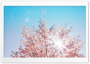 Spring Sunshine HD Wide Wallpaper for Widescreen