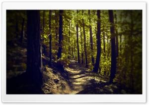 Spring Sunshine Ultra HD Wallpaper for 4K UHD Widescreen desktop, tablet & smartphone