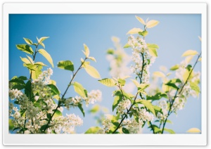 Spring Sunshine Tree Flowers HD Wide Wallpaper for Widescreen