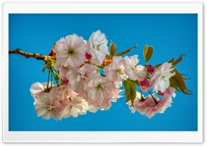 SPRING TIME Ultra HD Wallpaper for 4K UHD Widescreen desktop, tablet & smartphone