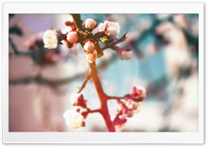 Spring Tree Buds HD Wide Wallpaper for Widescreen