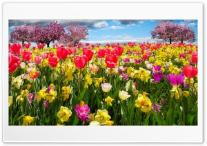 Spring Trees and Flowers HD Wide Wallpaper for Widescreen