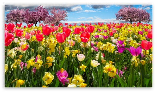 Spring Trees and Flowers ❤ 4K UHD Wallpaper for 4K UHD 16:9 Ultra High Definition 2160p 1440p 1080p 900p 720p ; UHD 16:9 2160p 1440p 1080p 900p 720p ; Smartphone 5:3 WGA ; Tablet 1:1 ; iPad 1/2/Mini ; Mobile 4:3 5:3 3:2 16:9 - UXGA XGA SVGA WGA DVGA HVGA HQVGA ( Apple PowerBook G4 iPhone 4 3G 3GS iPod Touch ) 2160p 1440p 1080p 900p 720p ; Dual 16:10 5:3 16:9 4:3 5:4 WHXGA WQXGA WUXGA WXGA WGA 2160p 1440p 1080p 900p 720p UXGA XGA SVGA QSXGA SXGA ;