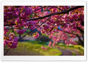 Spring Walk Away HD Wide Wallpaper for 4K UHD Widescreen desktop & smartphone