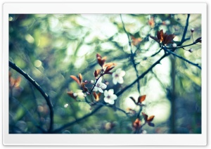 Spring White Flowers HD Wide Wallpaper for Widescreen