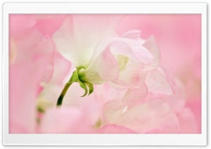 Spring will be here soon. pink HD Wide Wallpaper for Widescreen