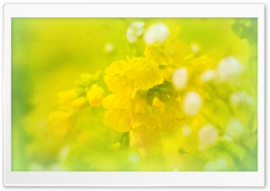 Spring will be here soon. yellow HD Wide Wallpaper for Widescreen