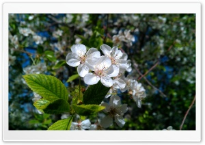 Spring's Flowers HD Wide Wallpaper for Widescreen