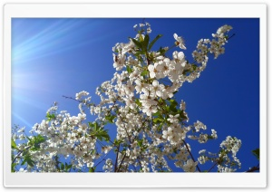 Springtime HD Wide Wallpaper for Widescreen