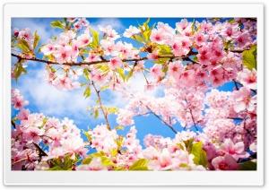 Springtime Ultra HD Wallpaper for 4K UHD Widescreen desktop, tablet & smartphone