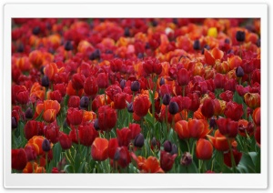Springtime Colour HD Wide Wallpaper for Widescreen