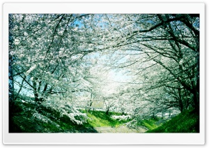 Springtime, Iga River HD Wide Wallpaper for Widescreen