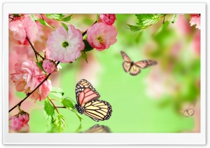 Springtime Joy HD Wide Wallpaper for Widescreen