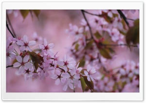 Springtime Memories HD Wide Wallpaper for Widescreen