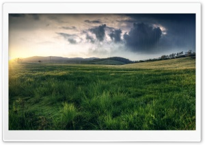 SpringTime Rain HD Wide Wallpaper for Widescreen