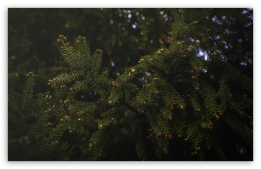 Spruce ❤ 4K UHD Wallpaper for Wide 16:10 5:3 Widescreen WHXGA WQXGA WUXGA WXGA WGA ; 4K UHD 16:9 Ultra High Definition 2160p 1440p 1080p 900p 720p ; UHD 16:9 2160p 1440p 1080p 900p 720p ; Standard 4:3 5:4 3:2 Fullscreen UXGA XGA SVGA QSXGA SXGA DVGA HVGA HQVGA ( Apple PowerBook G4 iPhone 4 3G 3GS iPod Touch ) ; Smartphone 5:3 WGA ; Tablet 1:1 ; iPad 1/2/Mini ; Mobile 4:3 5:3 3:2 16:9 5:4 - UXGA XGA SVGA WGA DVGA HVGA HQVGA ( Apple PowerBook G4 iPhone 4 3G 3GS iPod Touch ) 2160p 1440p 1080p 900p 720p QSXGA SXGA ; Dual 16:10 5:3 16:9 4:3 5:4 WHXGA WQXGA WUXGA WXGA WGA 2160p 1440p 1080p 900p 720p UXGA XGA SVGA QSXGA SXGA ;