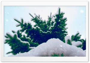 Spruce Tree Winter HD Wide Wallpaper for 4K UHD Widescreen desktop & smartphone