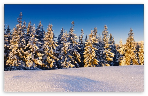 Spruce Trees Covered In Snow HD wallpaper for Wide 16:10 5:3 Widescreen WHXGA WQXGA WUXGA WXGA WGA ; HD 16:9 High Definition WQHD QWXGA 1080p 900p 720p QHD nHD ; Standard 4:3 5:4 3:2 Fullscreen UXGA XGA SVGA QSXGA SXGA DVGA HVGA HQVGA devices ( Apple PowerBook G4 iPhone 4 3G 3GS iPod Touch ) ; Tablet 1:1 ; iPad 1/2/Mini ; Mobile 4:3 5:3 3:2 16:9 5:4 - UXGA XGA SVGA WGA DVGA HVGA HQVGA devices ( Apple PowerBook G4 iPhone 4 3G 3GS iPod Touch ) WQHD QWXGA 1080p 900p 720p QHD nHD QSXGA SXGA ;